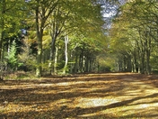 Autumn in Felbrigg Hall - Seasons