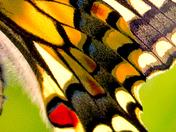 Detail in a Butterflies wing.