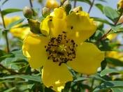DETAIL, Beetles On Bloom