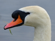 DETAIL, Swan's Head