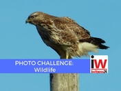 PHOTO CHALLENGE: Wildlife