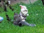 MR GNOME I LOVE YOU !