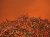 Orange sky orange tree