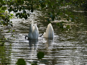 Bottoms Up, Swans Searching For Weed