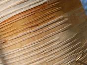 Detail: Silver Birch