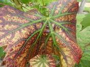 Detail: Leaf