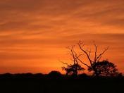 Sahara Sun/Sunset