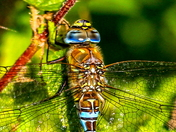 Detail - Migrant Hawker