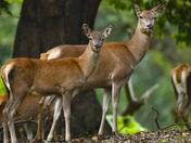 Deer Rut this week at Holkham,