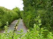 Old Norfolk Road