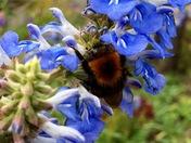 Bees enjoying the Autumn sun ( Detail comp)