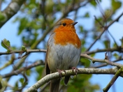 ORANGE. Just Had To Be A Robin