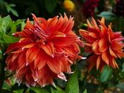ORANGE. Blooms