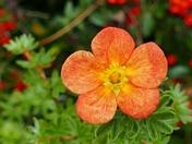 ORANGE. Bloom