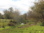 Enjoyed a sunny Autumn saunter round Marston Marshes earlier!