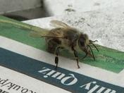 Brainy bee