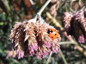 Ladybird and tree