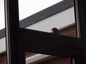 I AM STILL CALLING AT THE WINDOW
