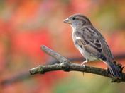Autumnal colours enhance bird portraits
