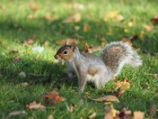 Squirrel Everits Park