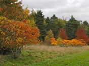 Marks Tey Arboretum