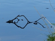 MIRROR. Twig In The River