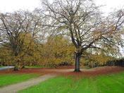 Autumn at Sandringham