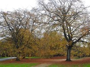 Autumn at Sandringham