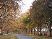 Kings avenue at Sandringham