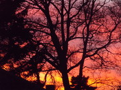 A NEW SUNSET SHOWS THROUGH AN OLD TREE