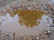 Reflection of Autumn leaves in a muddy puddle!