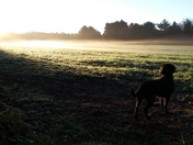 Early morning dog walk