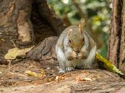 Christchurch Park Squirrels