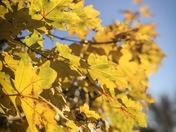 Beautiful Norfolk in the Autumn sun