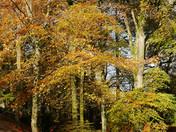 Autumn leaves at Woodbury Castle