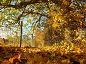 (Vibrant) Polstead Autumn walk