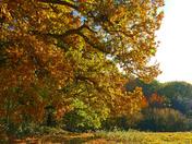 ( Vibrant) Polstead Autumn walk