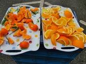 Orange Tasters