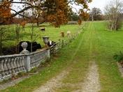 Cattle graze at Culford park.