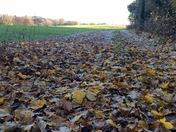 A walk through the autumn leaves