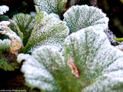 Jack Frost been busy