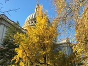 Autumn into winter at St. Paul's Cathedral, London