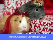 PHOTO CHALLENGE: Christmas Claws