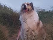 Beast on the dunes