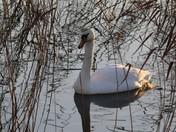 Minsmere RSPB Reserve