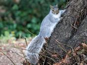 Squirrels @ the park.