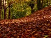 Autumn Leaves - Mousehold Heath