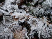 Frost and ice