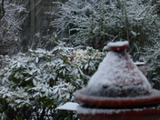 Snow in our rear garden