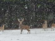 Snowing in Banham